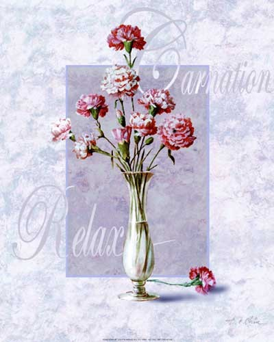 Carnation Relax