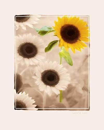 Sonnenblumen Kunstdruck