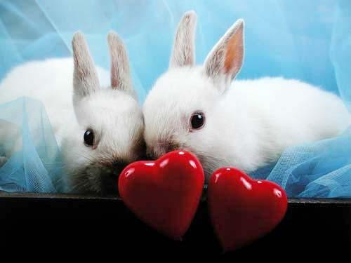 Kaninchen mit Herzen