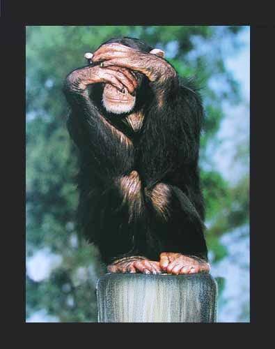 Affe: Nichts Sehen