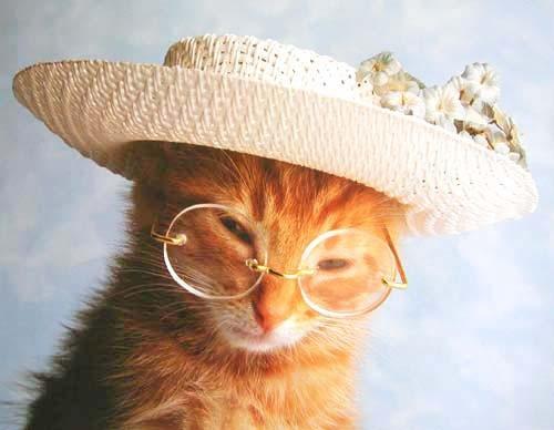 Katze mit Hut und Brille