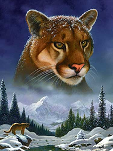 Mountain Lion by Meiklejohn Graphics