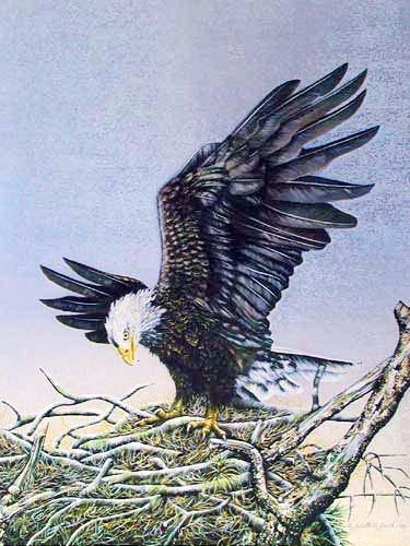 Weißkopfadler im Nest Alu Bild