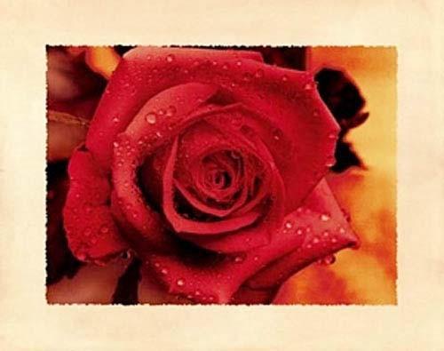 Blumen, Rote Rose Montage
