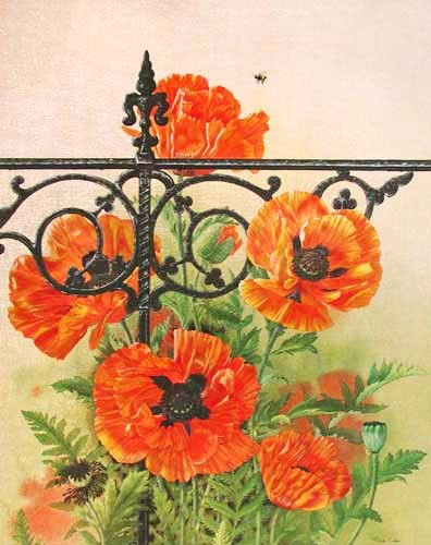 Poppies by Michelle Emblem