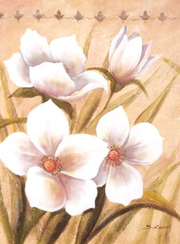 Vier weiße Blumen, S. Sauci