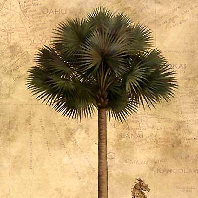 Palmen / Südsee