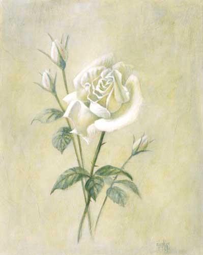 Weiße Rose, Jenkins Kunstdruck