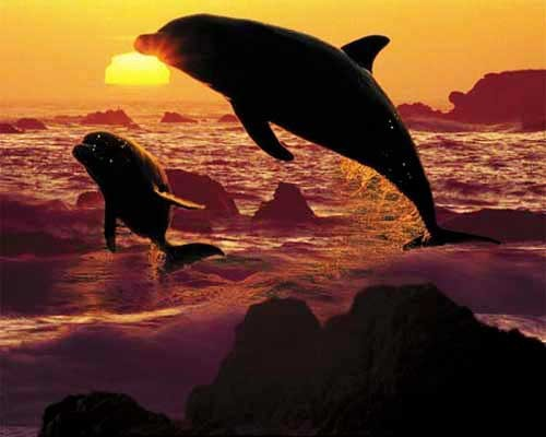 Springende Delfine im Sonnenuntergang Poster