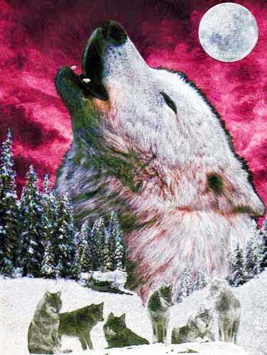 Wolfsrudel bei Vollmond Alubild