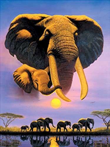 Elefant Dusk