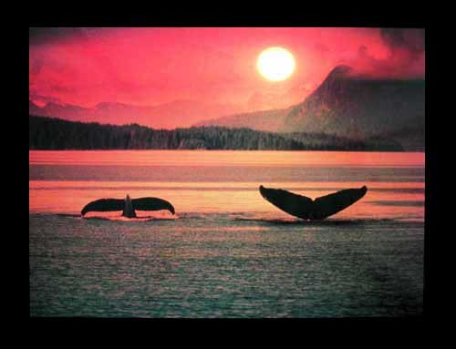 Wale bei Sonnenuntergang Poster 40x50 cm