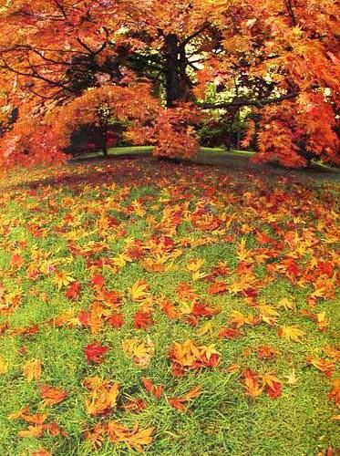 Herbst Alu Bild