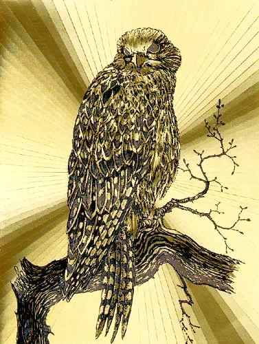 Gyr Falcon by Yvonne Jones