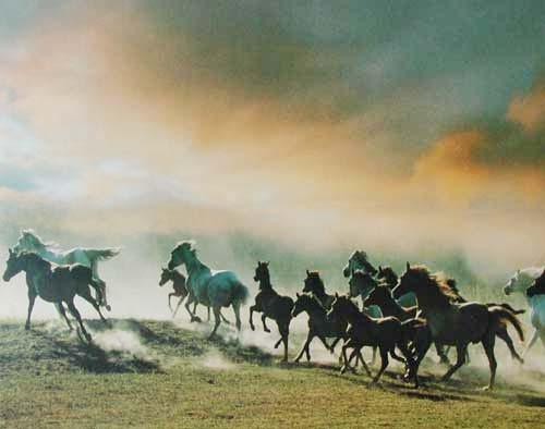 Wilde Pferde by Zofia Raczkowska