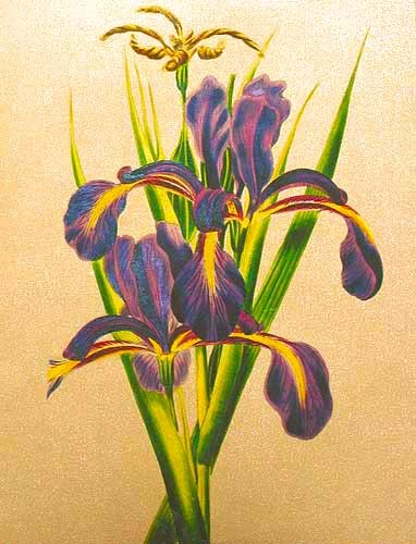 Iris Lilien