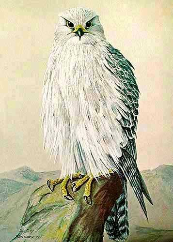 Gyr Falcon by Smith