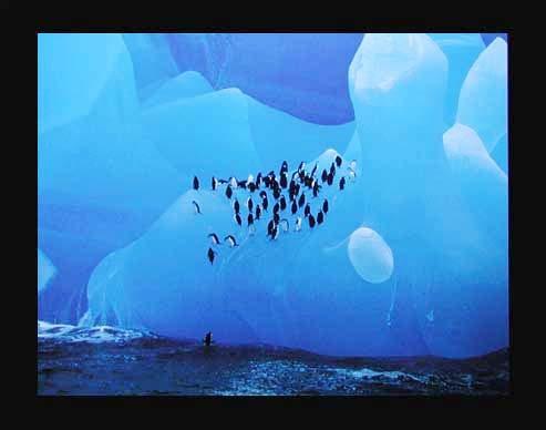 Pinguine auf Eisberg
