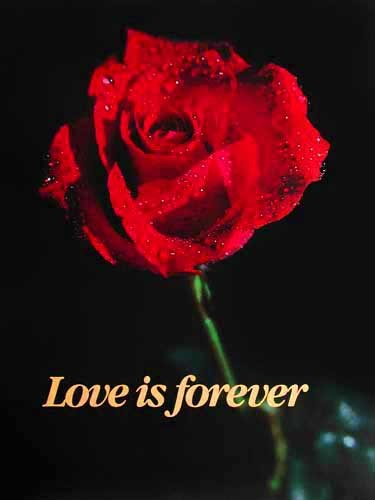 Rote Rose, Love is forever - Poster