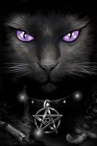 Magische Katze Poster