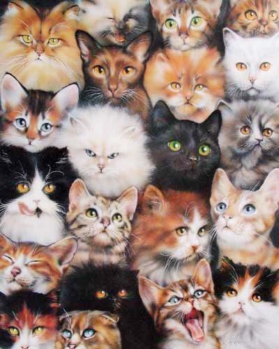 Cat Collage by Dan Mc Manis