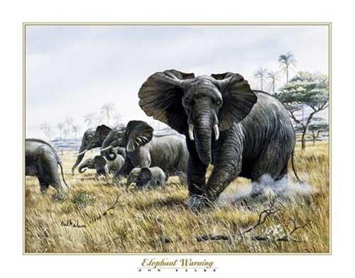Elefant von Don Balke Kunstdruck 56x71 cm