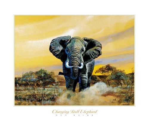Stürmender Elefantenbulle, Don Balke Kunstdruck 40x50 cm