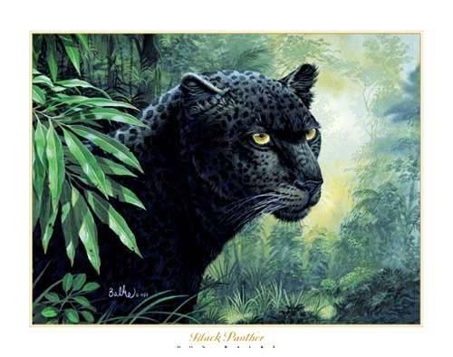 Schwarzer Panther, Balke Kunstdruck 40x50