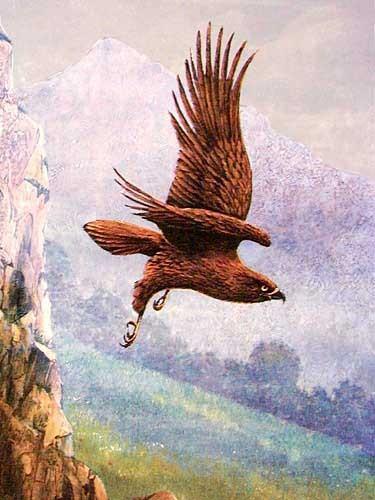 Steinadler Bild