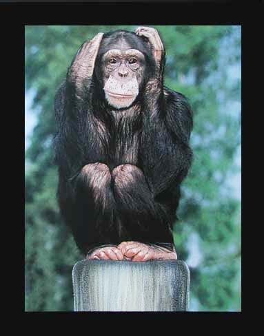 Affe: Nichts Hören