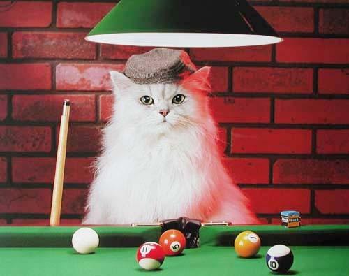 Katze beim Billard