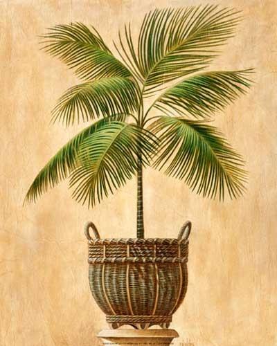Palme II Kunstdruck 20x25 cm