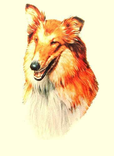Collie by Greensmith