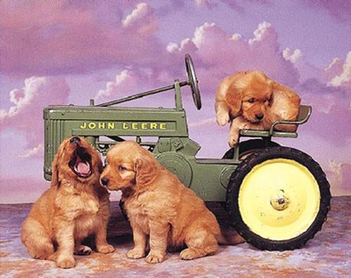 Golden Retriever und Traktor