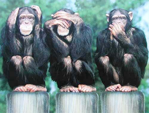 Drei Affen: Nichts sehen, nichts hören, nichts sagen