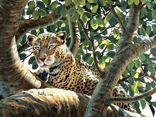 Serengeti Leopard by Don Balke *