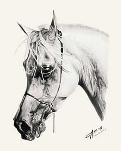 Pferdekopf in schwarz-weiß Poster