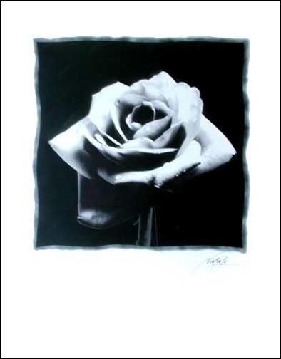 Schwarze Rose by Natali