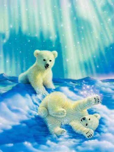 Kleine Eisbären Bild