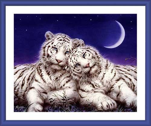 Weißer Tiger - Wandbild 60x70 cm