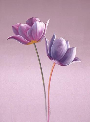 Zwei Tulpen in Violett