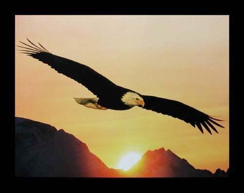 Seeadler im Sonnenuntergang Poster