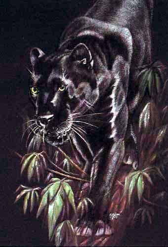 Schwarzer Panther in der Nacht