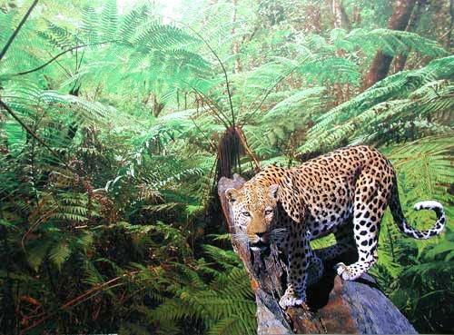 Leoparden, Leopard