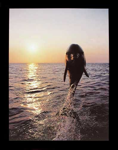 Delphin im Sonnenuntergang