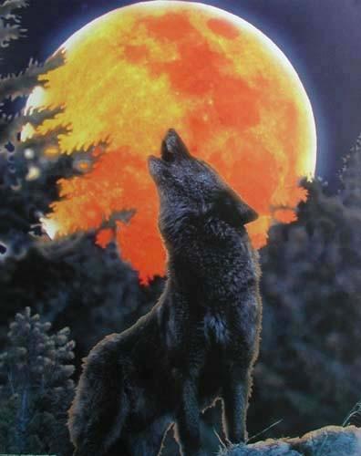 Wolf und roter Vollmond