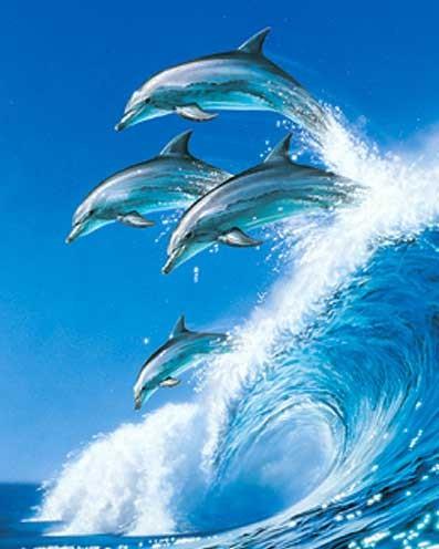 Alu Bild 16x21 cm- Delfine auf Welle