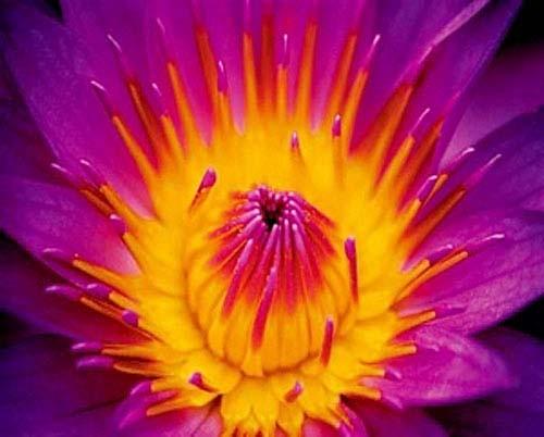 Blume in Violett Poster 40x50