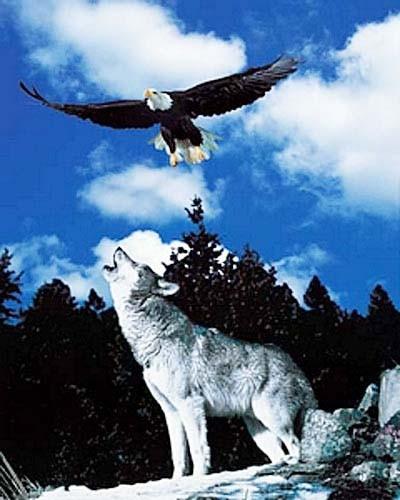 Fotomontage: Wolf und Seeadler Poster