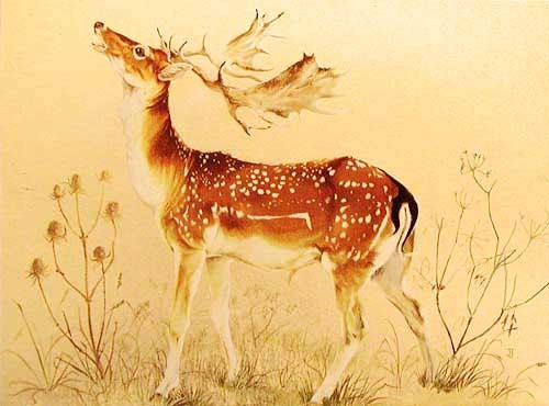 Braying Stag by Janet Johnstone